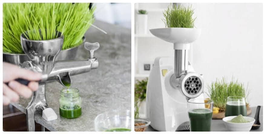 wheat grass juicer